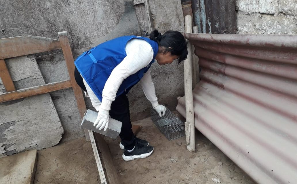 Intensifican acciones de vigilancia y prevención de peste bubónica en Víctor Larco